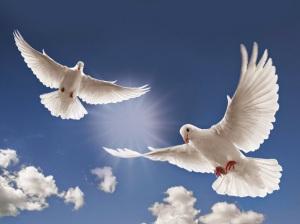 dove-flying