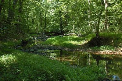 summer-creek