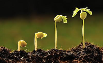 seed-start