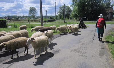 shepherd_2da