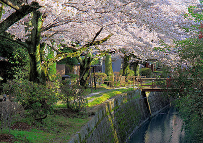 CWF3YA Cherry trees in bloom over canal and path with bridge