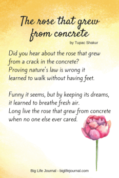 rose_that_grew_from_concrete_poem_grande
