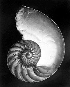 shell-1927(1)