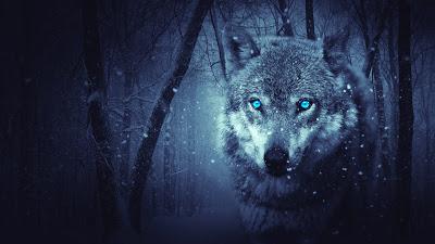 wild-wolf-3840x2160-blue-eyes-scary-snowfall-winter-4k-7180