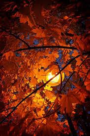 autumn lamplight