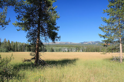 Beautiful_Meadow_in_Yellowstone_National_Park