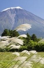 plumegrass_5fe