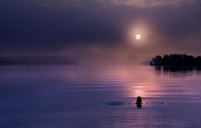 moonlight swimming