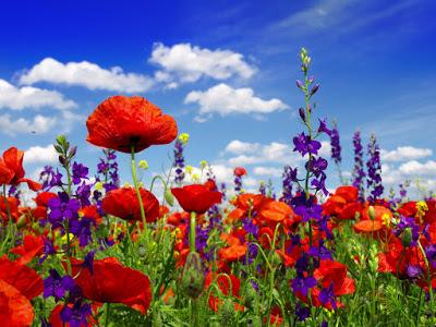 Summer-wildflowers