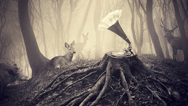 Deer, record player
