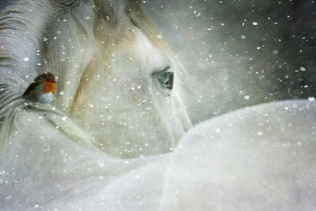 winter-wonderland-3821445_1920