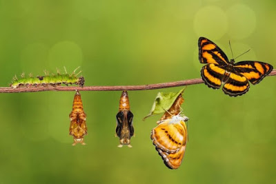 metamorphosis-butterfly-transformation
