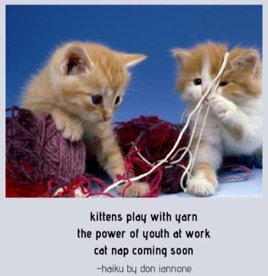 kitten-haiku.png