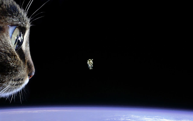 205590-cat-astronaut-Earth-space-floating